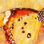 """""""and we will all laugh at gilded butterflies"""" - Bedeutung & Übersetzung"""
